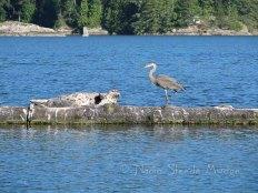Seal meets bird