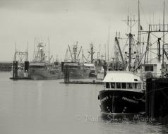 #014 Steveston Fishboats