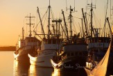 #055 Steveston Fish Boats