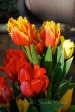 #083 Tulips
