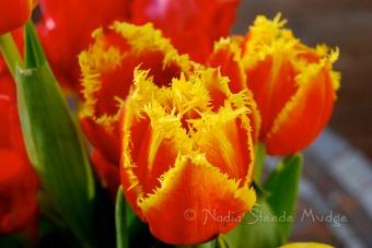 #084 Tulips-1