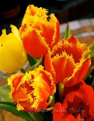 #086 Tulips-3