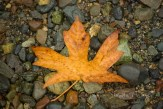 #096 Beached Leaf