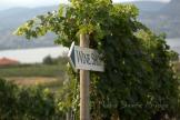 #117 Wine Shop