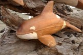 #334 baby Orca DSC_2931