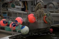 #339 Steveston fishing DSC_2996