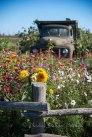 Westham Island Herb Farm