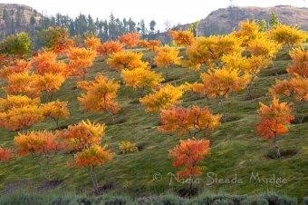 Cedar Creek hills