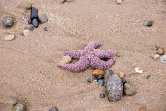 Lost Starfish
